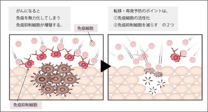 転移・再発予防のポイントは、1.免疫細胞の活性化、2.免疫抑制細胞を減らす、の2つ。