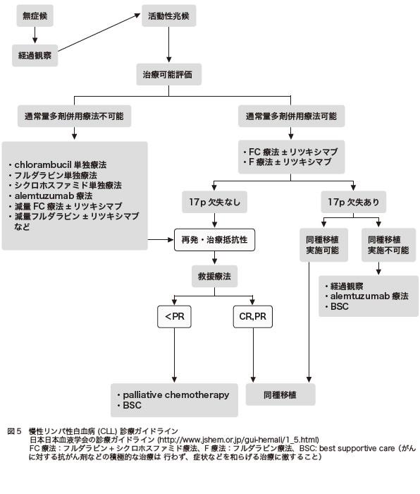 図5 慢性リンパ性白血病 (CLL) 診療ガイドライン 日本日本血液学会の診療ガイドライン(http://www.jshem.or.jp/gui-hemali/1_5.html)FC 療法:フルダラビン+ シクロホスファミド療法、F 療法:フルダラビン療法、BSC: best supportive care( がんに対する抗がん剤などの積極的な治療は 行わず、症状などを和らげる治療に徹すること)