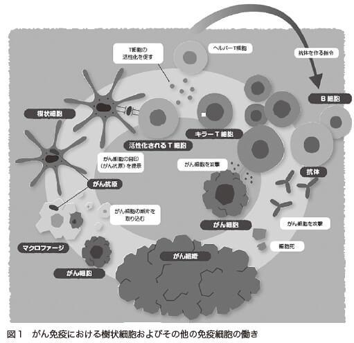 図1 がん免疫における樹状細胞およびその他の免疫細胞の働き