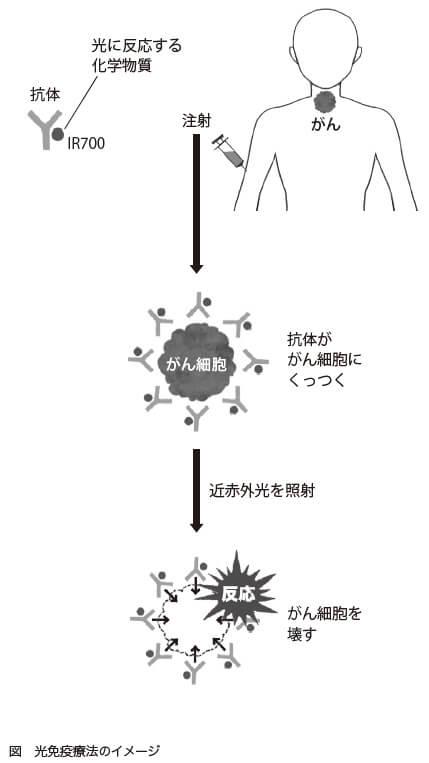 図 光免疫療法のイメージ