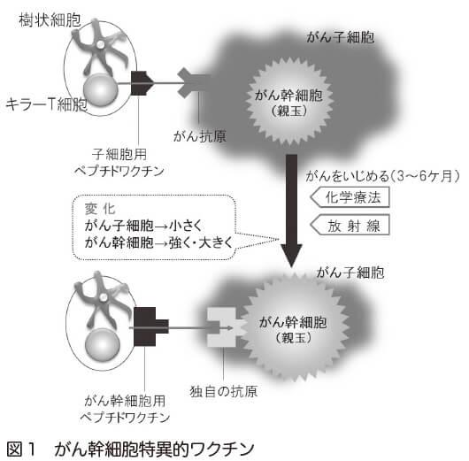 図1 がん幹細胞特異的ワクチン