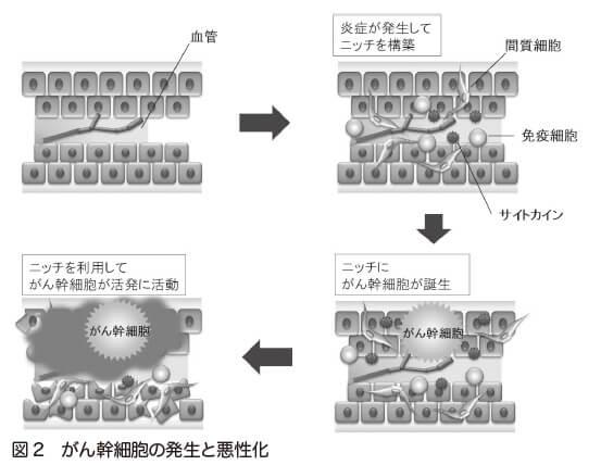 図2 がん幹細胞の発生と悪性化
