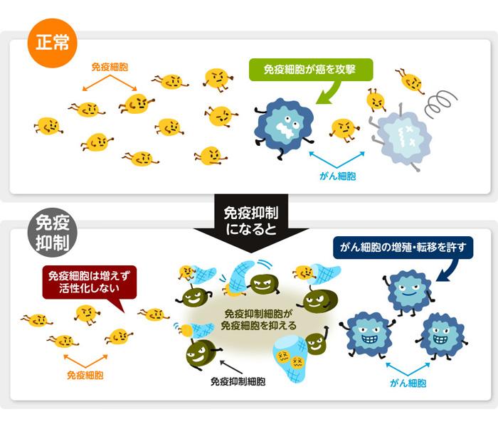 図1 免疫抑制のメカニズム(提供:小林製薬)
