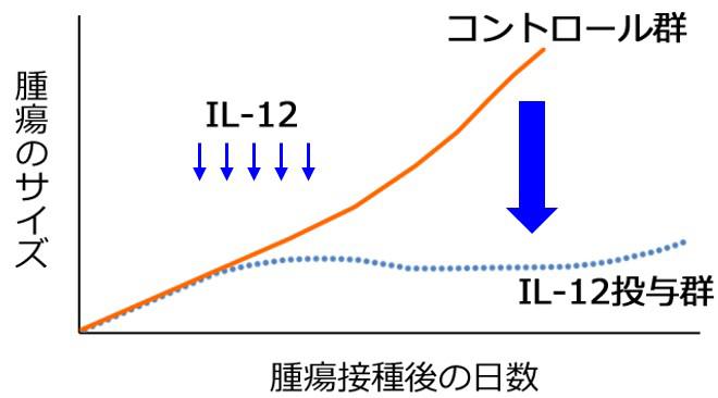 図1 IL–12 投与によるがん増殖抑制効果