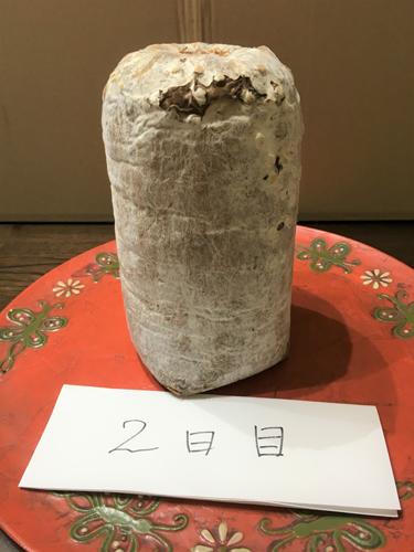写真3 シイタケ菌糸体の培養物 2日目