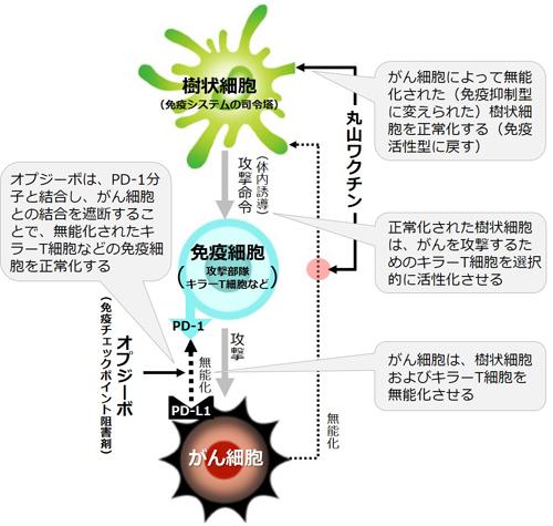 図3 丸山ワクチンとオプジーボの作用機序
