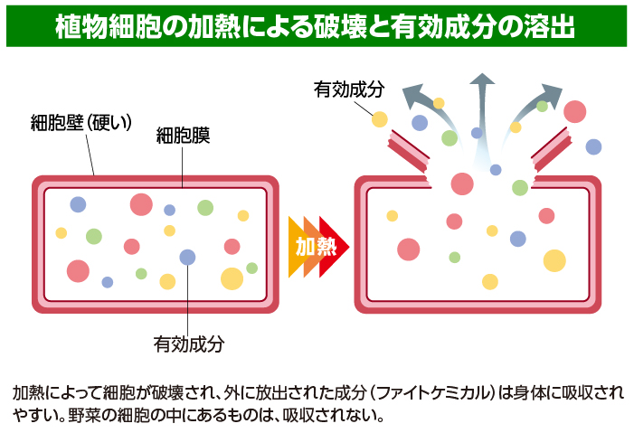 図2 植物細胞の加熱による破壊と有効成分の溶出 加熱によって細胞が破壊され、外に放出された成分(ファイトケミカル)は身体に吸収されやすい。野菜の細胞の中にあるものは、吸収されない。